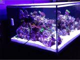 Cad Lights Aquarium Cadlights Rimless 120g 48x30x20 1st Week Higor Youtube