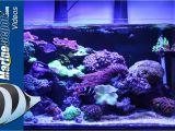 Cad Lights Aquarium Marine Depot Featured Tank Cad Lights Artisan 70 Gallon Reef Tank