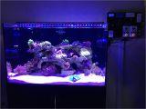 Cad Lights Aquarium My Review Of Cadlights Aquariums Reef2reef Saltwater and Reef