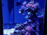 Cad Lights Aquarium Scubapoochs Cadlights 18g Build Aquarium Journals Nano Reef Com