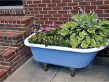 Clawfoot Bathtub Planter Dr Dan S Garden Tips Using the Unusual
