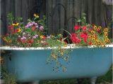 Clawfoot Bathtub Planter My Cast Iron Claw Foot Bathtub Used as A Planter by My