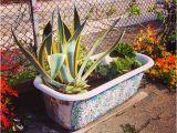 Clawfoot Tub Garden Clawfoot Tub Garden Em43 – Roc Munity