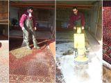 Coit Rug Cleaning San Francisco Coit Carpet Creativeadvertisingblog Com