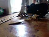 Concrete Floor Scraper Removing Hardwood Floor with A Floor Scraper Youtube
