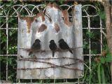 Corrugated Iron Garden Art Tin Birds On Wire Rusty Corrugated Iron Corregated Metal Tin