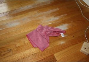 Dog Pee Smell On Wood Floors Get Rid Dog Urine Out Carpet Traditional Vs Modern