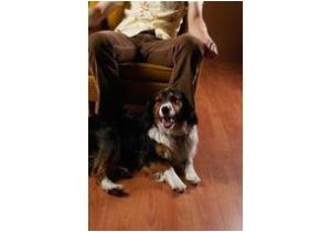 Dog Pee Smell On Wood Floors How to Get Rid Of Dog Pee Smell On A Wood Floor