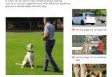 Dog Runners for Backyards Amazon Com Iduola Dog Training Collar with Remote Dog Training