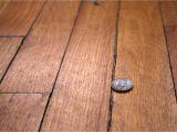 Epoxy Wood Floor Crack Filler How to Repair Gaps Between Floorboards