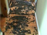 Fix Scratched Polyurethane Wood Floors How to Fix Prefinished Hardwood Floor Scratches Carpet