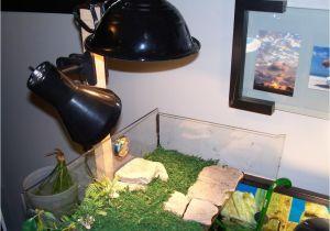 Fluker S Clamp Lamp Flukers Clamp Lamp Length Habitats and Equipment Turtle forum