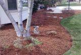 Forest Floor Mulch Auckland Landscape Job 10 Pine Straw Mulch and Bed Maintenance