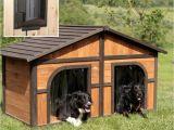 Free Large Breed Dog House Plans Duplex Dog House Plans Emergencymanagementsummit org