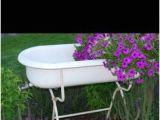 French Baby Bathtub 98 Best Bushes Images On Pinterest