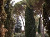 Garden Art Umbrellas Firenze 380 Best N D D N Images On Pinterest Beautiful Gardens Garden Art