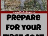 Goat Hay Rack 164 Best Goats Images On Pinterest Goat Farming Raising Goats and