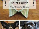 Homemade Heat Lamp for Dogs Diy Doggie Dress Shirt Collar Dog Pinterest Pets Dogs and Dog