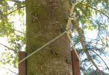 How to Build A Zipline In Your Backyard Best Directions On How to Build A Zip Line In the Backyard Garden