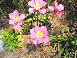 How to Make Inexpensive Flower Plate Garden Art 37 Fresh Metal Flowers Yard Art Inspiring Home Decor
