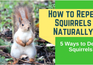 How to Repel Squirrels From Garden Inspirational How to Repel Squirrels From Garden