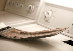 Interior Dryer Vent Lint Trap Clothes Dryer Lint is A Fire Hazard