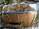 Jacuzzi Bathtub toronto toronto Zoo's Elephants Could Be Guzzling Gatorade On