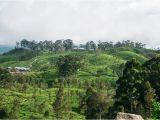 Jacuzzi Bathtubs In Sri Lanka the Best Things to See and Do In Ella Sri Lanka
