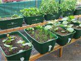 Large Bathtubs Australia Greensmart Pot Large Polycarbonate Greenhouses