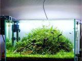 Led Light for Planted Aquarium 60l Planted Aquarium by Filipe Powered by Aquaflora Plants Plants