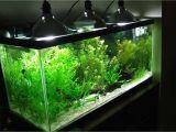 Led Light for Planted Aquarium Aquarium Lighting Basics the Case for Led Fixtures