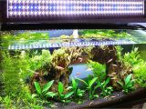 Led Light for Planted Aquarium Live Plants and Lighting In Aquariums