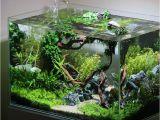 Led Light for Planted Aquarium Pin Od Poua¾avatea¾a Masanori Hashida Na Nastenke A'¢aƒ¼aƒ†a'a'¹aƒˆ Pinterest