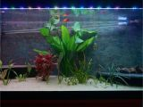Led Light for Planted Aquarium Rgb Aquarium Lights with Sunsets and Sunrises 4 Steps with Pictures