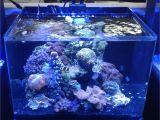 Led Lights for Reef Tank Jbj Nano Cubes Chillers and Lighting Jbjnanocubes Com