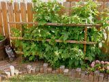 Lowe's Canada Spice Rack Luxury Raspberry Bush Trellis Images Home Decor