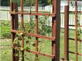 Macy's New York oriental Rugs Grape Vine Trellis Design Inspirational Garden Fence Grapevine