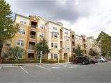 One Bedroom Apartments Tampa Fl Near Usf the Club at Hidden River Rentals Tampa Fl Apartments Com