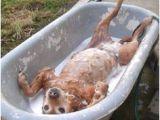 Outdoor Bathtub for Dogs Outdoor Bath Tub On Pinterest
