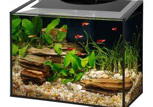 Petco Aquarium Light Aqueon ascent Frameless Led Aquarium Kit Petco