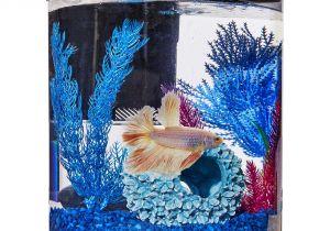 Petco Aquarium Light Imagitarium Cylindrical Betta Fish Desktop Tank Kit Petco
