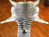 Real Zebra Skin Rug Uk Authentic Trophy Grade Real Zebra Hide