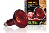 Red Heat Lamp for Chickens Amazon Com Exo Terra Heat Glo Infrared Spot Lamp 150 Watt 120