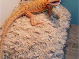 Reptile Flooring for Bearded Dragon Www Ksmsdragonlandings Com Custom Made Bearded Dragon Hammocks