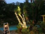 Rope Light Palm Tree How to Wrap Trees with Outdoor Lights