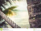 Rope Light Palm Tree Tropical Beach with Palm Trees During Sunset as Summer Vacation