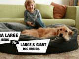 Snoozer Overstuffed sofa Pet Bed Reviews 6 Extra Large Dog Beds for Xl Xxl Dog Breeds Reviewed