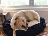 Snoozer Overstuffed sofa Pet Bed Reviews Snoozer Cozy Cavea Dog Bed 12 Colors Fabrics 3 Sizes
