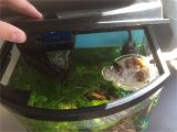 Star Wars Fish Tank Decor Homemade island for Aquariums with Land Dwellers I E Fiddler Crabs