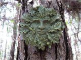 Tree Faces Garden Art Green Man Face Concrete Face Oak Tree Face Cement Faces Tree